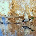 Winter mallards by Alan Mattison IPA