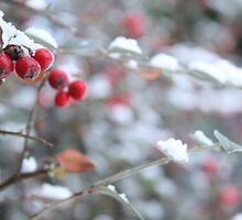 Red berries in the snow by Esther  Moliné