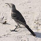 mocking bird by tripi100