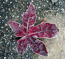 Red leaf by Roxy J