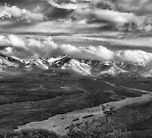 In Denali National Park, Alaska B/W by Vickie Emms
