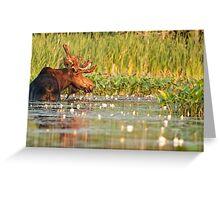 Moose In The Marsh Greeting Card