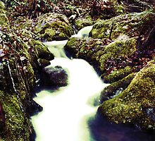 Green Limpy Creek by Ryan Whittaker