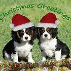 Christmas Cavaliers by Jenny Brice