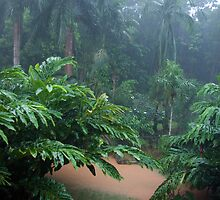 Tropical Rain & Garden Flood Waters  by Kerryn Madsen-Pietsch