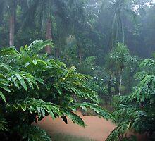 Tropical Rain & Garden Flood Waters  by Kerryn Madsen-Pietsch