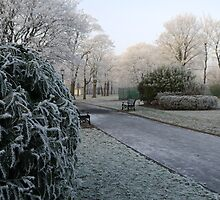 Frosted parkland by Greg Brotherton