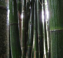 Bamboo spark by wildwoosi