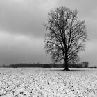 Field of White and Black by Rowan Kempf