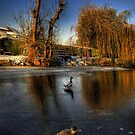 Ducks On Ice  by Yhun Suarez