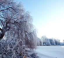 Weeping willow in morning frost by Alex Maciag