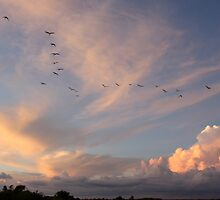 Birds head home to roost for the night by MarkySA