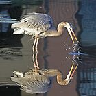 Great blue heron with reflection by jozi1