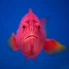 pink fish by Shirley Bittner