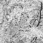 Dogwood in Snow by Yih-Tai  Chen
