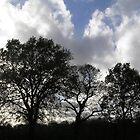 Tree silhouette by Alien Banana