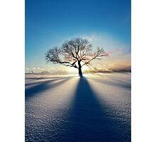 Treeclipse Photographic Print