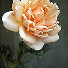 ~ A Rose for Mary ~ by Lynda Heins