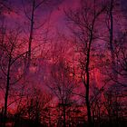 Red Sky                   by NatureGreeting Cards ccwri