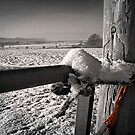 Gatepost and twine by Kelvin Hughes