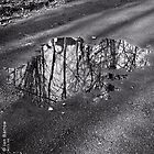 Reflection - Leyland by synergymono