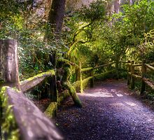 follow the path by pdsfotoart