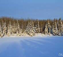 Shadowy Pines by Don Arsenault