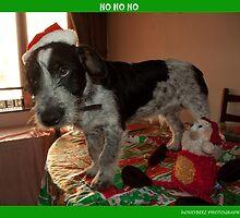 ho ho ho  by David Ford Honeybeez photo