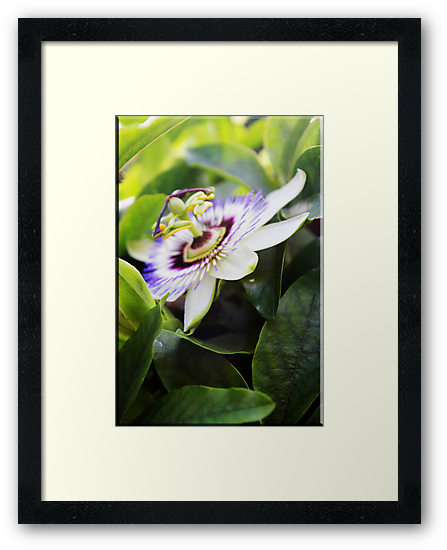 Passion flower II by Rookwood Studio ©
