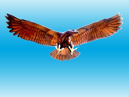 Alrewas Eagle by GreenPeak