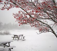 December 26 Storm, 2010 (featured-WINTER 2010 in the North-East USA ) by Poete100