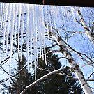 Winter wonderland by MarieG