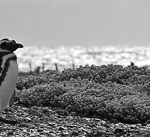 penguin by myemilydog