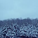 Trees in the snow by joedog