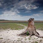 African landscape by Wim De Wulf