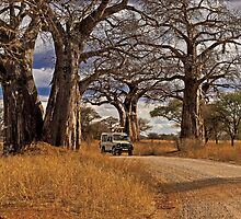 Under the giant Baobabs by Konstantinos Arvanitopoulos