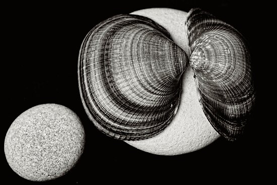 Relative Encirclement; pebble and shell still-life macro by Andrew Jones