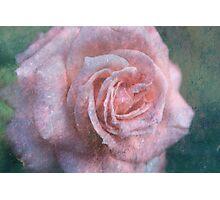 Vintage Rosa  - JUSTART © Photographic Print