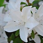White Wedding Flowers by Bill Colman