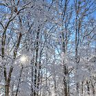 Winter Woods by JGetsinger