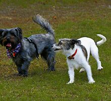 Who Let the Dogs Out? by Paul Gitto