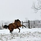 Horse Play by Laura  Donnell