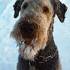 Snow beard by Anne Kingston