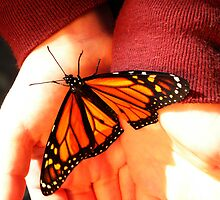 Monarch on Hand by designerbecky