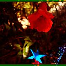 Red flower Christmas by shallay