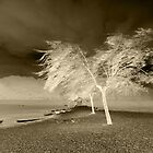 Tree in the wind by simia