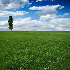 Wide Open Spaces by SDImages
