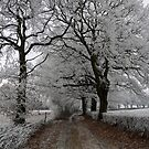 Frosty oak tree lane by photontrappist