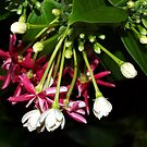 Flowers on a tropical vine by  B. Randi Bailey