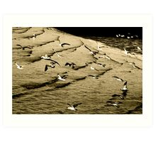 The gull's army of seabirds was forced to concede Art Print